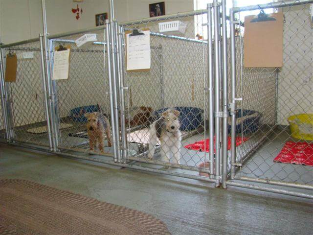 Dog Kennels In Puyallup